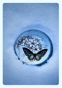 If nothing ever changed, there`d  be no butterflies